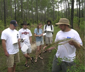 Learning about Imperata cylindrica